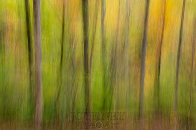 Forest Abstract 1