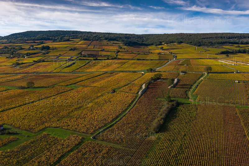 Fall foliage on grape vines colors them red, orange and gold in Bourgogne, France