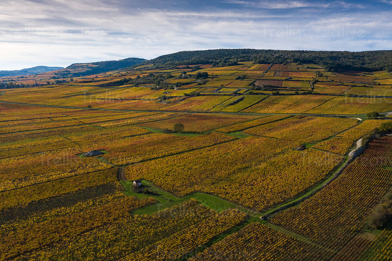 Historic and famous Burgundian vineyards in France