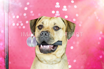 Dog_holding_microphne_in_mouth