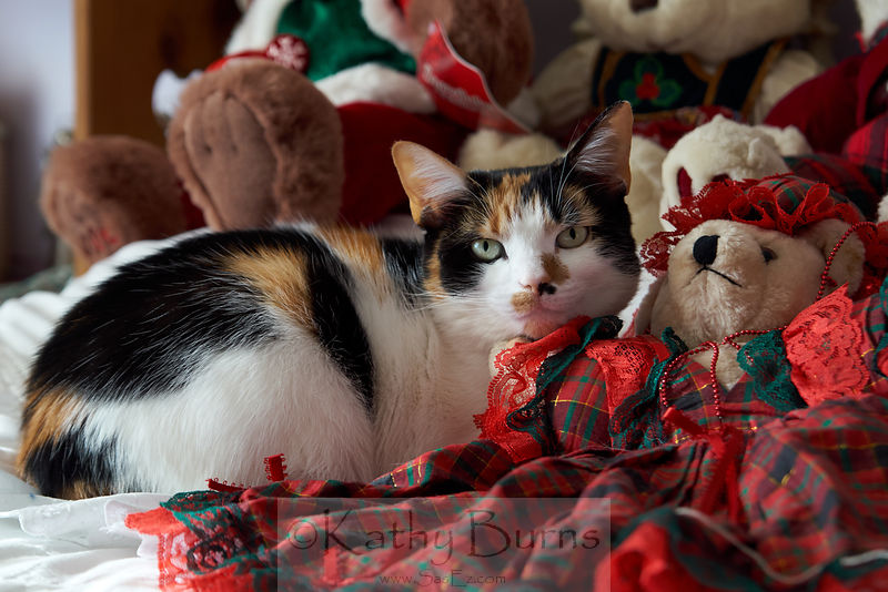 Calico Cat With Teddy Bear