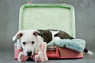 Puppy Laying In Suitcase