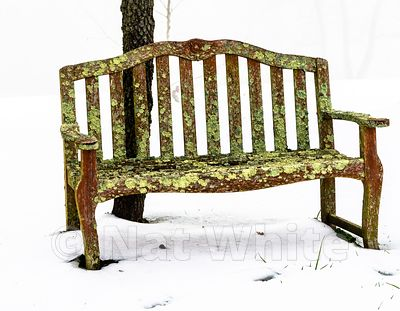 RC_lichen_chair-3370_December_21_2020_NAT_WHITE