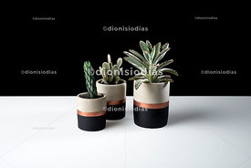 Cement vases with succulents and cactus
