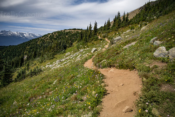 Hiking trail and landscape, Blackcomb Mountain, Whistler, Canada.