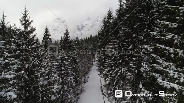 Fly through trees canopy rising to reveal beautiful mountains, Jenbach, Austria