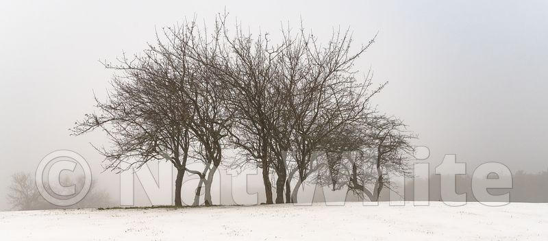 RC_fog_with_clump_of_trees-3431_December_21_2020_NAT_WHITE