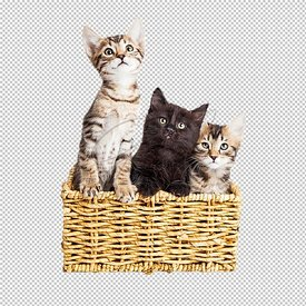 Three Cute Kittens in Basket