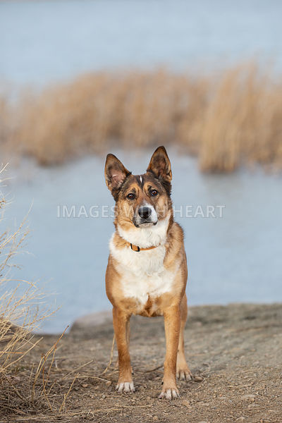 Dog-Standing-In-Front-Of-Lake