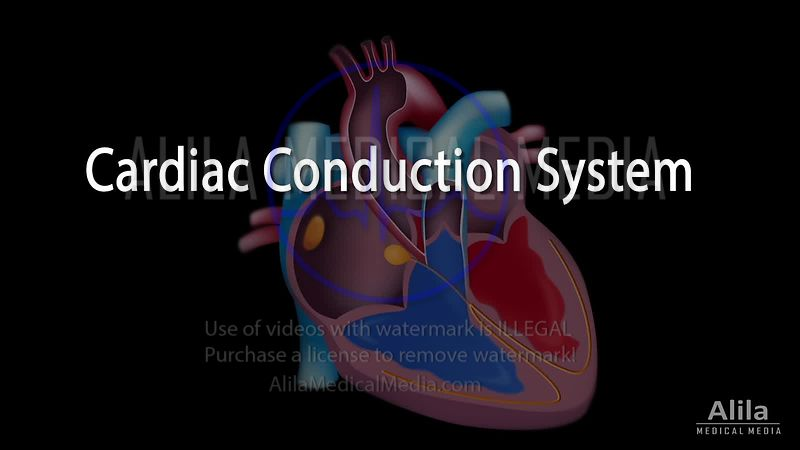 (AUSTRALIAN voice) Cardiac conduction system and ECG anatomy NARRATED video.