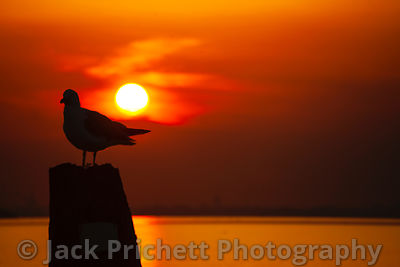 Silhouetted seagull on piling against flaming orange sunset