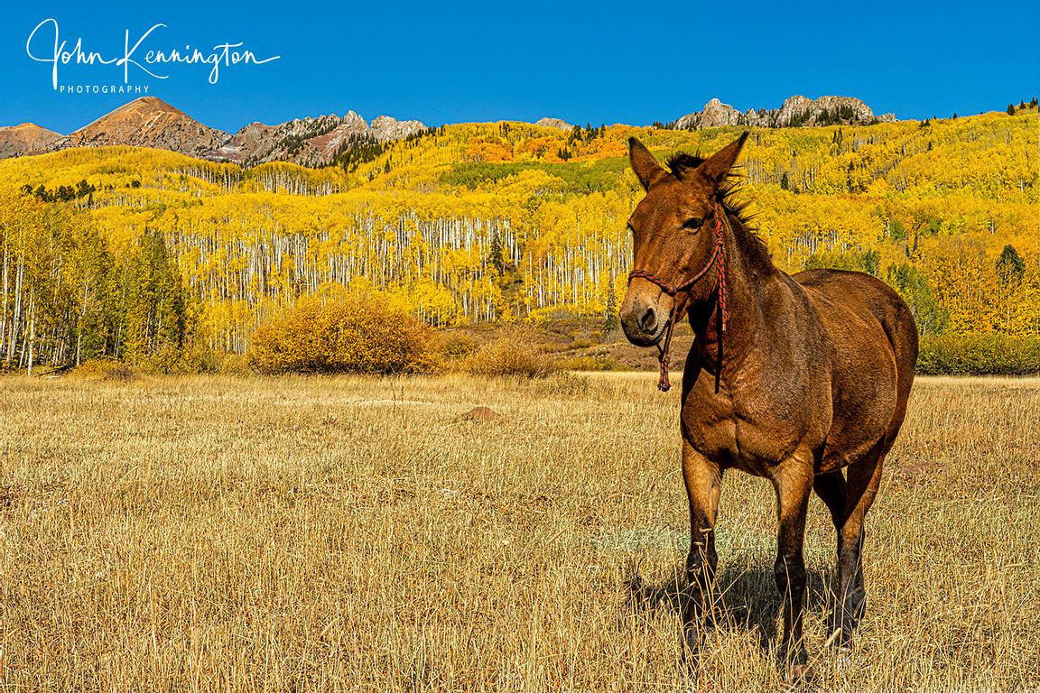 Horse and Fall Color, Uncompahgre National Forest, Colorado