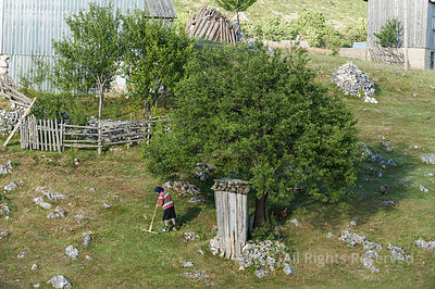 Old Lady Raking Grasses Under a Tree in a Typical Authentic Village in Montenegro