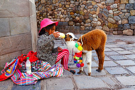 Quechua girl sitting on pavement giving milk to her pet baby alpaca (Vicugna pacos), Cusco, Peru