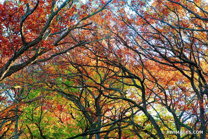 AUTUMN TREES KETTLE MORAINE FOREST WISCONSIN FALL COLORS