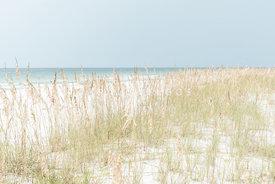 Dune Grass and Sea Oats Pensacola Beach Florida Photo