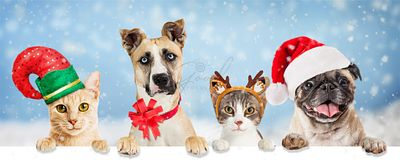 Christmas Holiday Dogs and Cats Over Web Banner