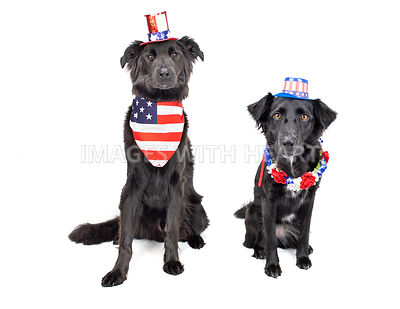 Patriotic Theme Studio Two Dogs
