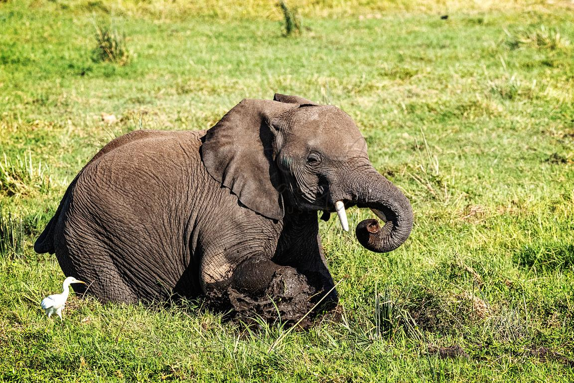 Baby Elephant In Mud in Amboseli
