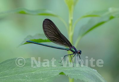 Damselfly-Filename_number_suffix-_1May_19_2019_NAT_WHITE