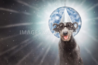 Funny New Year 2020 Dog