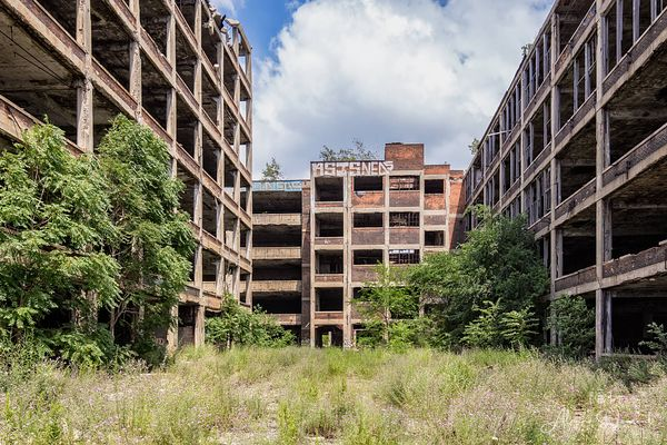Packard_Plant_Forest