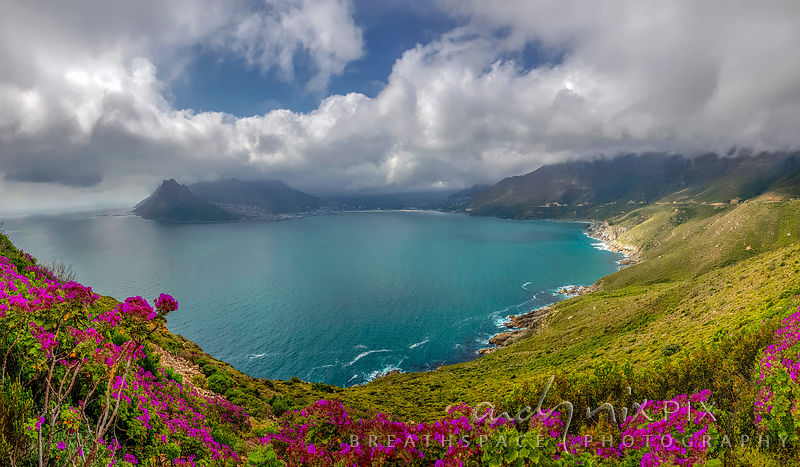 Hout Bay in Flower