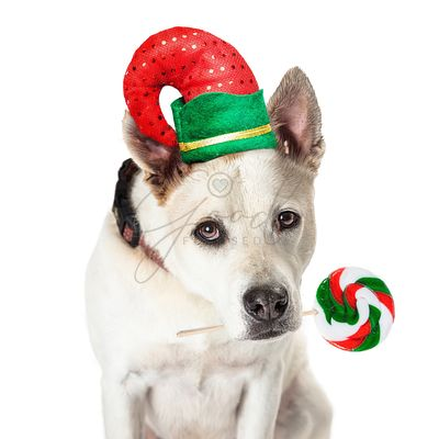 Funny Christmas Dog Elf Holding Candy Sucker