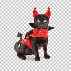 Black Cat in Devil Halloween Costume