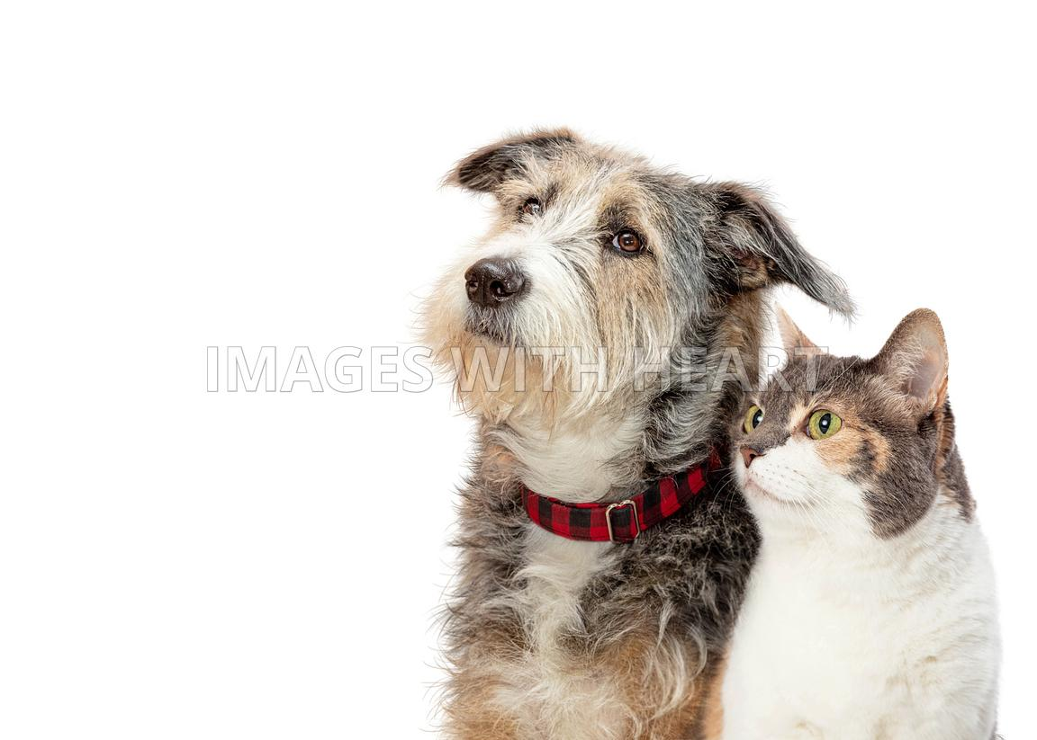 Tricolor dog and cat profile closeup side isolated
