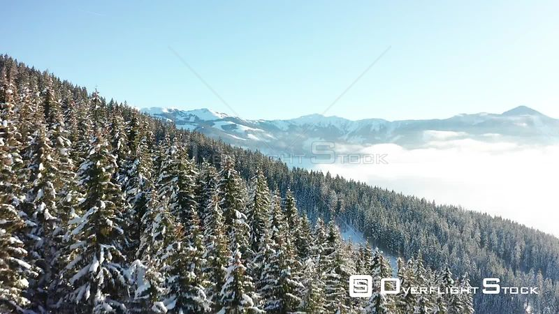 A Flight Over Trees on a Sunny Day in Zell Am See, Austria in Winter.