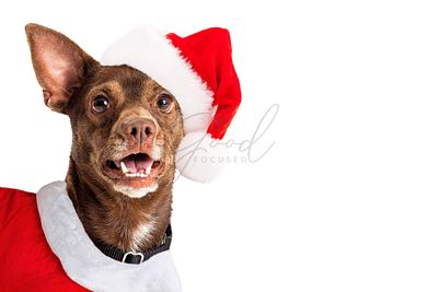 Joyful Christmas Santa Claus Dog