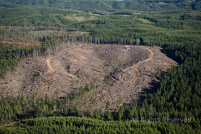 Clearcut Lumber Forests Washington USA