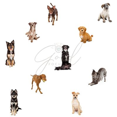Ten Cute Dogs on White Repeating Pattern