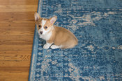 corgi puppy sitting on rug indoors