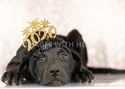 Black dog wearing 2020 headband with sparkle background