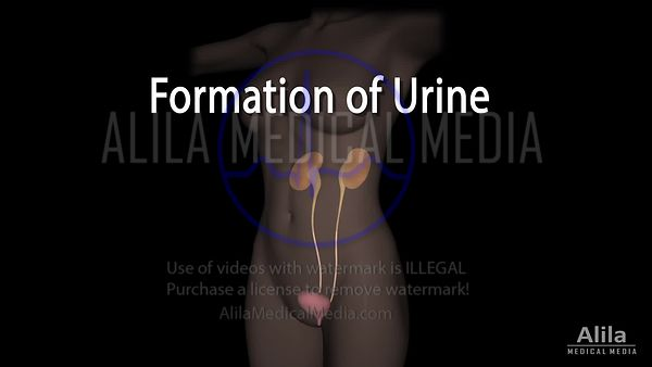 Formation of Urine NARRATED animation