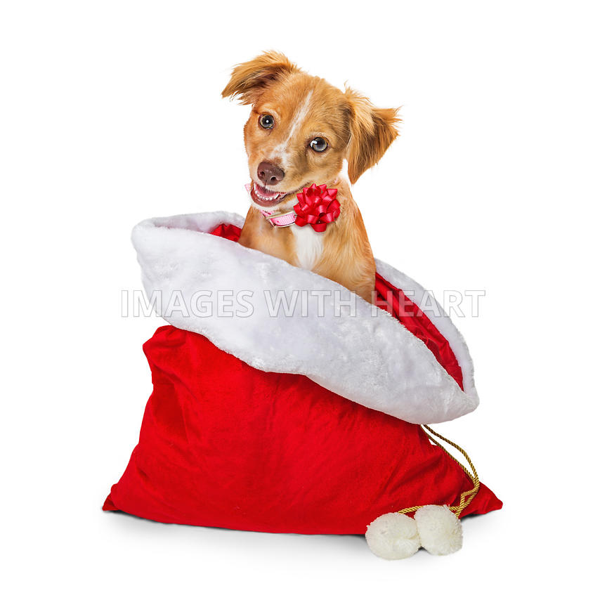 Cute Puppy in Christmas Santa Gift Sack