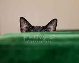 Close-up of black cat ears behind green sofa