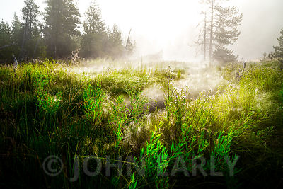 Steamy Meadow at Sunrise.