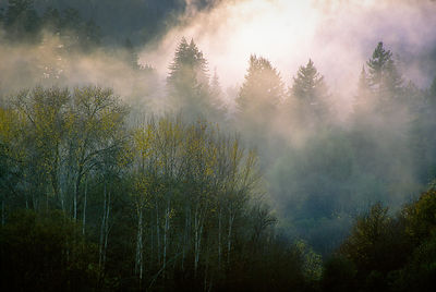 Santa Cruz Mountains Mist