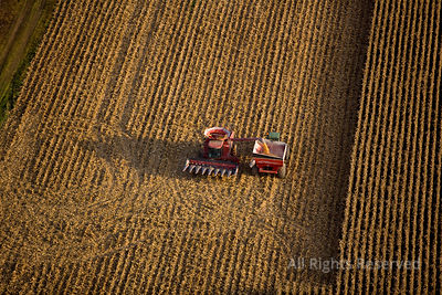 Corn Harvesting Valleyfield Quebec Canada