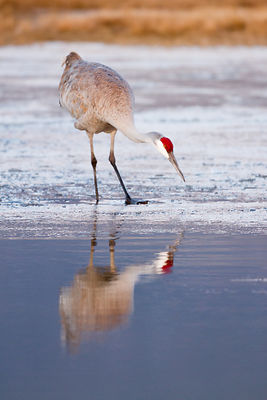 Crane Reflection