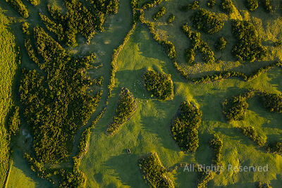 Aerial Image of Typical Countryside Landscape of Planalto Da Achada Central Plateau of Ilha Do Pico Island, Azores, Portugal