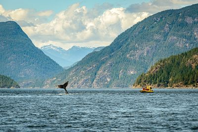 Whale watching near Campbell River
