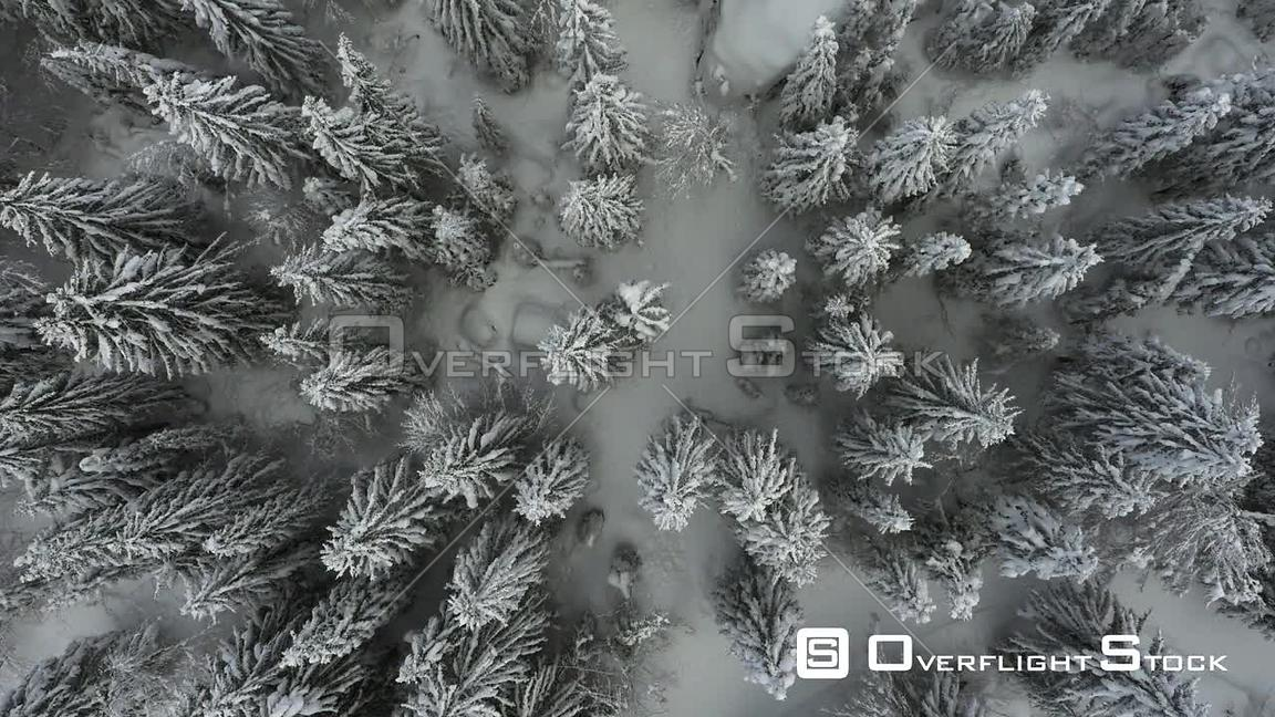 Aerial view looking straight down at snow covered trees, Chamonix, France