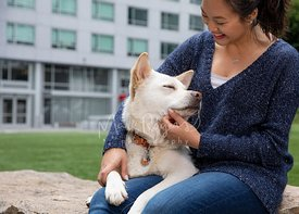 White Dog Closes Eyes while Smiling Asian woman Strokes its Neck