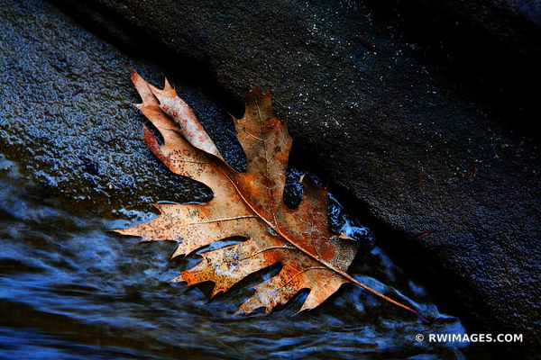 THE LEAF THE ROCK AND THE WATER | STARVED ROCK STATE PARK ILLINOIS NATURE