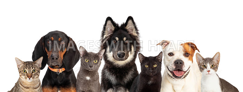 Cats and Dogs Together White Web Banner