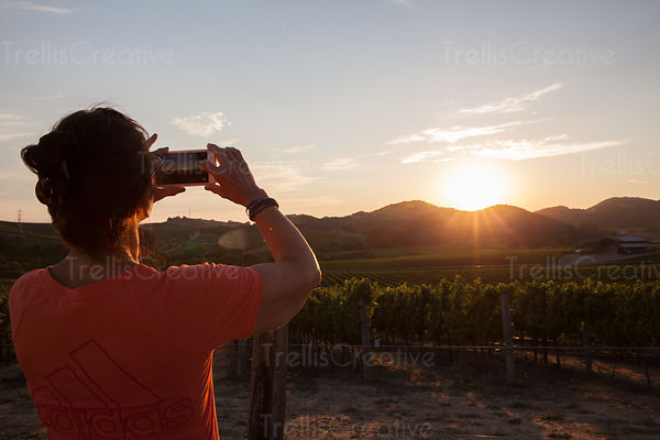 Tourist taking photograph of mountain vineyard at sunset, Napa Valley, California, USA.